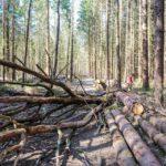 Минлесхоз: С 1 января 2019 года граждане могут собирать в лесу валежник для собственных нужд
