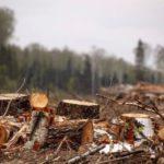 В Кильмезском и Пижанском районах с «черных лесорубов» взыскан вред охотничьим животным, причиненный рубками