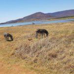 Путешествие в Африку: ехать или нет?