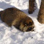 В Богородском районе обнаружили дикое животное с опасным заболеванием