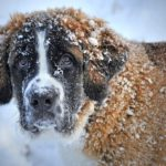 В Кировской области продолжается чипирование домашних животных