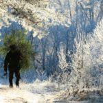 Жителям Кировской области напомнили о штрафах за вырубку елок
