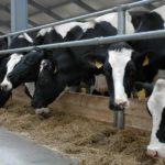 В Советском районе трое мужчин в масках избили сторожа сельхозпредприятия и похитили крупный рогатый скот: зарезаны две коровы и уведены два теленка