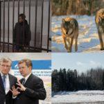 Итоги недели: задержание водителя, задавившего 10-летнюю девочку в Кирове, уголовные дела в отношении чиновников и «мусорная реформа»