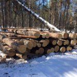 В Кирово-Чепецке подрядчика лесозаготовительного предприятия оштрафовали на 1 млн рублей за незаконную рубку леса