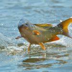 В Кировской области предложено изменить сроки запрета на вылов рыбы