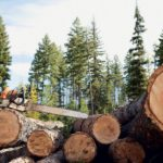 В Слободском районе осуждённый лесоруб возместил причиненный ущерб лесному фонду на сумму более 1,8 млн рублей