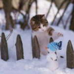 Погода на неделю: в Кировской области потеплеет и будет идти снег