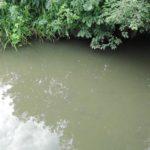 Предприятие обязали улучшить качество сточных вод: в реке Чахловица зафиксировали превышение концентрации вредных веществ в 45 раз