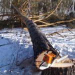 «Черный лесоруб» из Фаленского района, причинивший ущерб на сумму более 1,8 млн рублей, осужден на два года