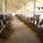 Кировская область стала второй в России по суточным надоям молока