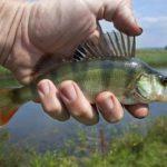 В Кировской области приостановлены конкурсы на предоставление участков для промышленного рыболовства