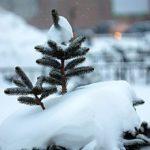 На рабочей неделе Кировскую область завалит снегом