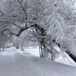 Погода в Кировской области: ожидается продолжение снегопада