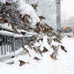 Погода на неделе: в Кировской области будет снежно и пасмурно