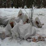 В кировском лесу обнаружена новая свалка с останками животных