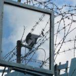В исправительном учреждении Кировской области заключенный пропагандировал терроризм: возбуждено уголовное дело