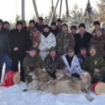 В Верхнекамском районе уничтожили стаю крупных волков