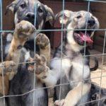 В региональном управлении ветеринарии разъяснили вступивший в силу закон об ответственном обращении с животными