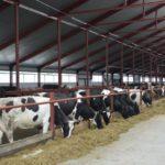 В Малмыжском районе хотят построить молочно-животноводческий комплекс с объемом инвестиций 2,6 млрд рублей