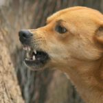 В Кирово-Чепецке у школы собака покусала шестерых учеников младших классов
