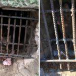В Кирове в подвале дома «замуровали» 10 кошек