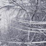 В Кировской области объявлено метеопредупреждение: ожидается опасное отложение мокрого снега