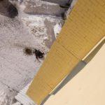 В Кирове обнаружили труп мужчины: кировчанин выпал с балкона 15 этажа