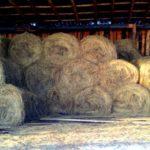 В Котельничском районе двое мужчин украли у кооператива 50 тонн сена