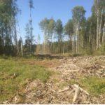 В Котельниче будут судить «черного» лесоруба, причинившего ущерб лесному фонду на сумму более 250 тысяч рублей
