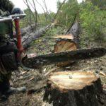 В Фаленском районе будут судить мужчину за незаконную рубку леса на сумму более 1,2 млн рублей