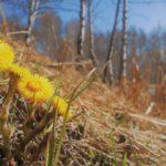 Синоптики-любители обещают холодный май в Кировской области
