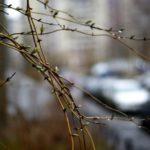 На выходных в Кировской области будет тепло, в воскресенье ожидается дождь