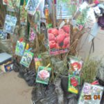 Специалисты Россельхознадзора обнаружили нарушения при продаже саженцев на ярмарке в Кирове