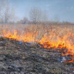 В Кировской области объявлено начало пожароопасного сезона