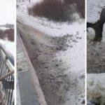 В реки Кировской области сбрасывают кадмий, свинец и мышьяк