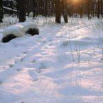 В Кировской области в лесу нашли тело пропавшего сторожа делянки
