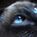 В Кирове изъяли из продажи опасный лосьон для глаз животных