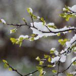 В субботу кировские синоптики обещают мокрый снег и снежную крупу