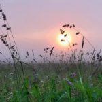 Аномальная жара в Кировской области сменится резким похолоданием