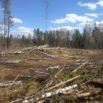 В Даровском лесничестве арендаторов через суд заставят обеспечить пожарную безопасность в лесах