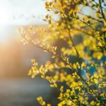 В выходные синоптики прогнозируют потепление в Кировской области до +18°С