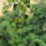 Рабочая неделя в Кировской области будет теплой и дождливой