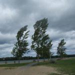 МЧС: В Кировской области объявлено метеопредупреждение из-за сильного ветра