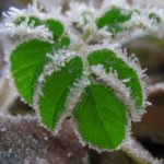 Кировские агрономы рассказали, как спасти урожай в заморозки