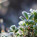 В Кировской области объявлено метеопредупреждение: ожидается усиление заморозков до -3°С