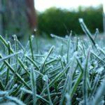 Заморозки в Кировской области усилятся до -5°С