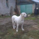 В Кирово-Чепецке осудили хозяина собак, которые насмерть загрызли женщину