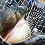 В Кирово-Чепецке задержали трех браконьеров с сетями