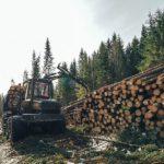 В Кирово-Чепецком районе мужчина получил тяжелые травмы при заготовке леса